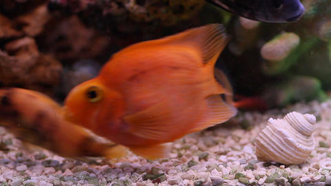 aquarium fish Stock Video Footage