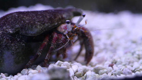 Marine crab Stock Video Footage
