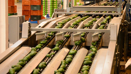 Linepack Industry Fruit Avocados stock footage