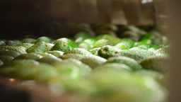 Avocado Hass In Linepack Close Up stock footage