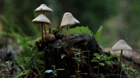 Growing mushroom on tree trunk Footage