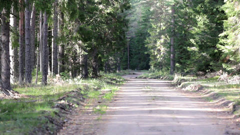 Trail in the forest Footage