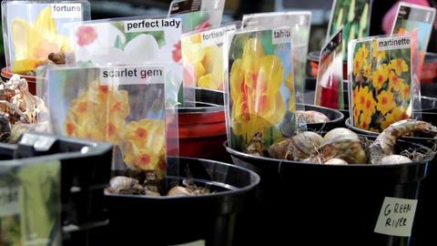 Seedlings in a pot Footage