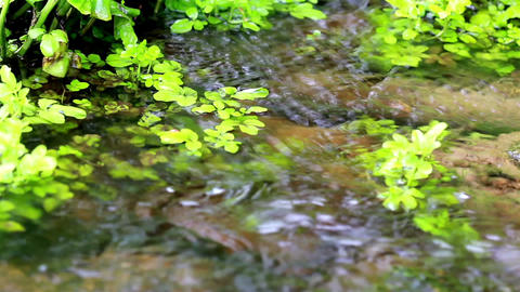 Water Flowing Along The Rushing Sound In The Backg stock footage