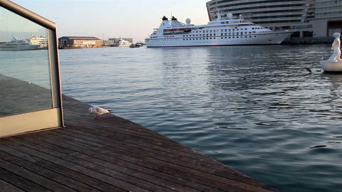 Seagull standing at the port Footage