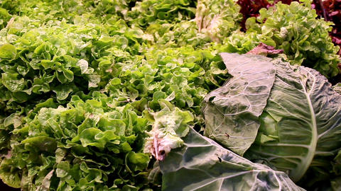 Big cabbages and green leafy vegetables Footage
