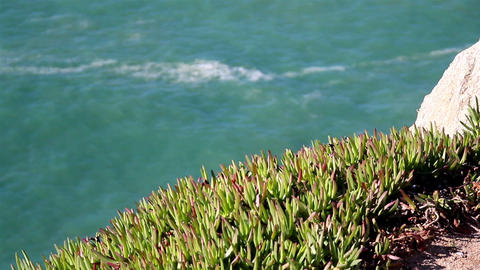 Watching the water on a cliff green grasses on top Footage