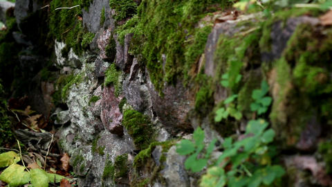 Rock stone wall covered in moss Footage