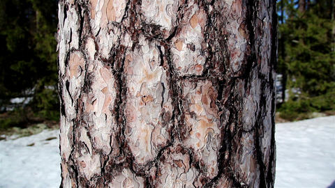 Circle spots on the trunk of the tree Footage