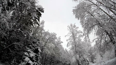 Tall trees on the roadside covered with snow Footage