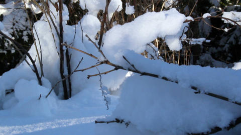 Dried stems of plants covered with thick snow Footage