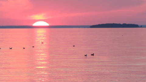 evening sea sunset in the wild nature with seagull Live Action