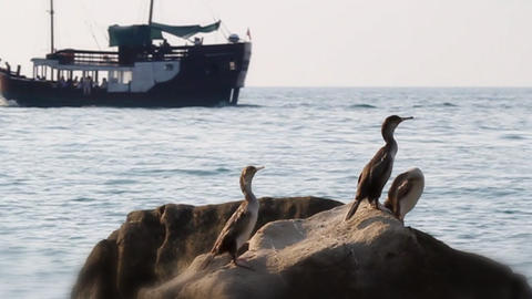 Birds On The Rock And Ship In The Distance stock footage