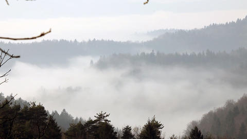 Still shot of mist rising above forest Live Action