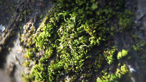 Close up of moss on the tree Live Action
