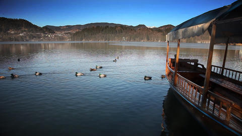 Ducks swimming pass boat in Bled's lake Footage