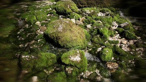 Still shot of a river running through moss in wood Live Action