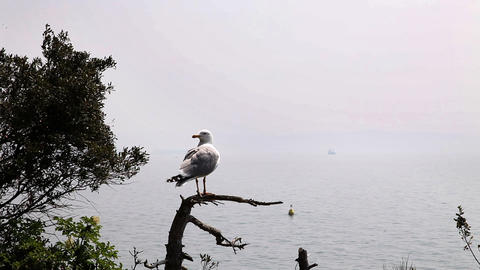 seagull seatting on the branch Live Action