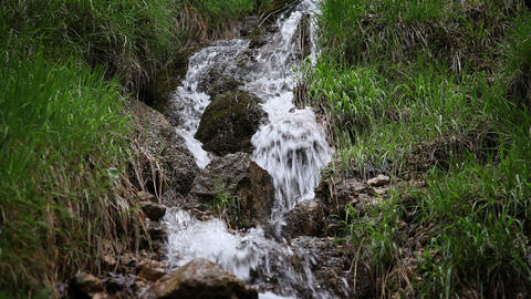 Shot of the small stream in the forest Live Action
