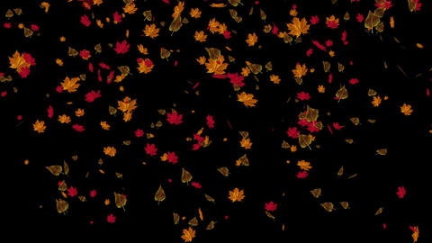 Falling Leaves Stock Video Footage