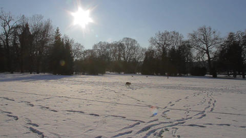 park in winter Stock Video Footage