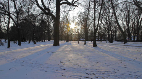 park in winter Footage