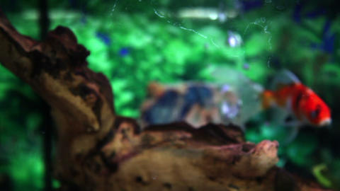 Close up shot of a fish tank with small fishes Live Action