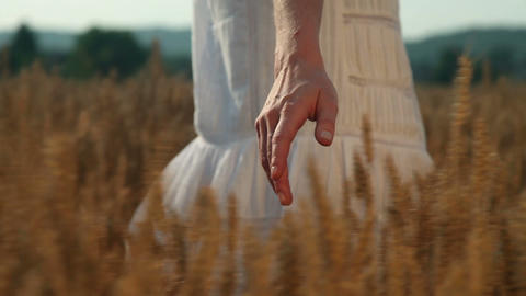 a woman's hand touching wheat grains Footage