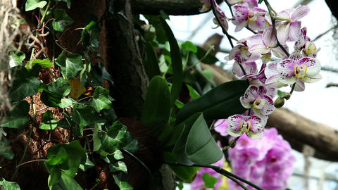 orchids in natural environment Footage