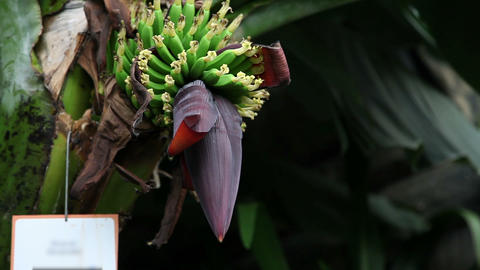 blossom of exotic flower Stock Video Footage