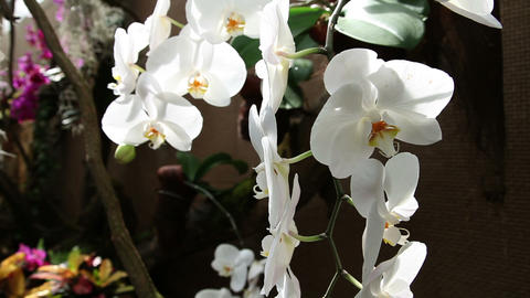 group of white orchids Footage