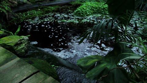 Jungle flowers Footage
