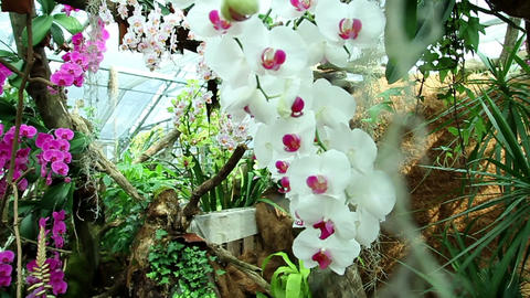 Orchids Footage
