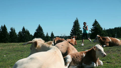 Young woman jogging where cows are resting Footage