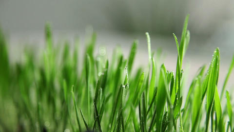 Decorative Grass On A Table stock footage