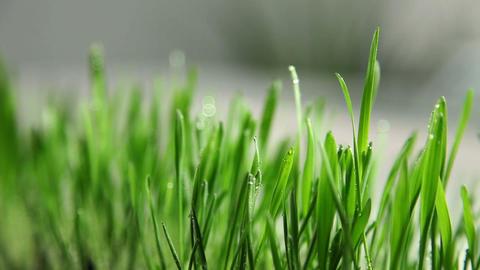 Grass' Blades In Kitchen stock footage