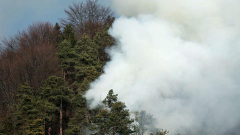 Close View Of Natural Disaster, Smoke In Forest stock footage