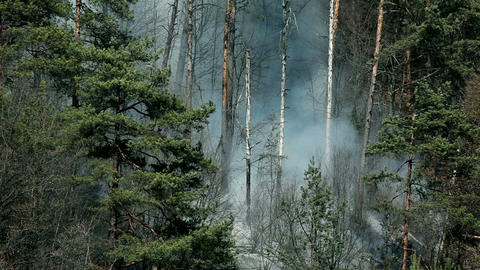 Close view of smoke, natural catastrophe in forest Live Action