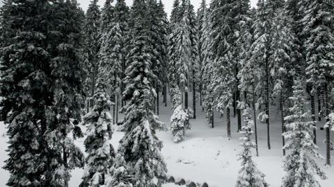 Idyllic ski slope with snowy spruce tree forest Footage