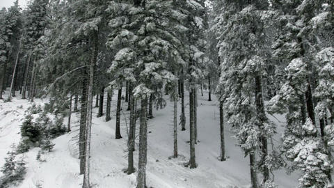 Idyllic ski slope and snowy spruce tree forest Footage