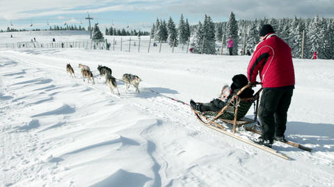 Sledge with huskies running in the idyllic nature Live Action