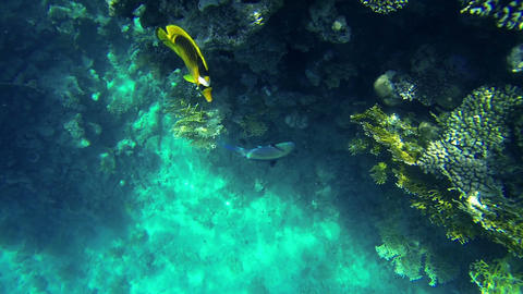 Fishes and corals in sea Footage