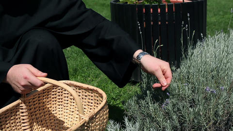 Close Up On Hands Of Monk Picking Up Herbs stock footage