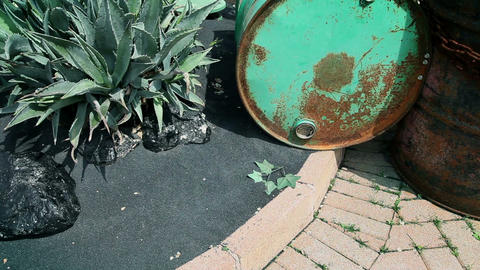Asphalt with greenery growing Footage