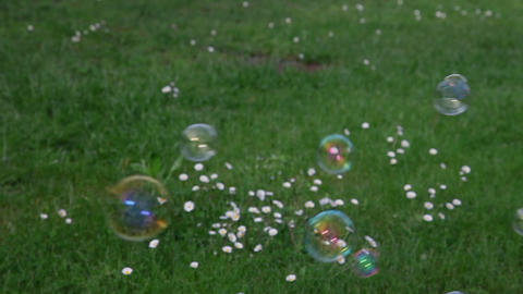 soap bubbles on green lawn Footage