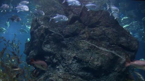 Shark Stock Video Footage