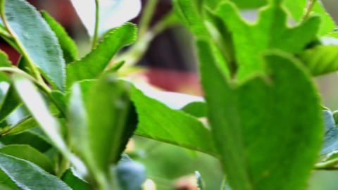 foliage in the garden Stock Video Footage