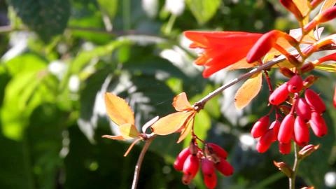 berries in the garden Stock Video Footage