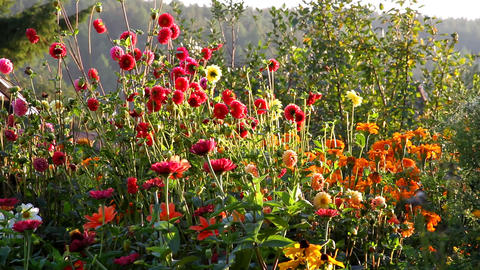 flowers at sunset Stock Video Footage