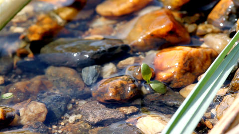 water and plant Stock Video Footage